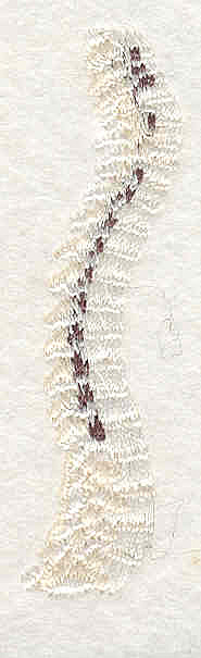 """Embroidery Design: Spine 2  2.65"""" x 0.69"""""""
