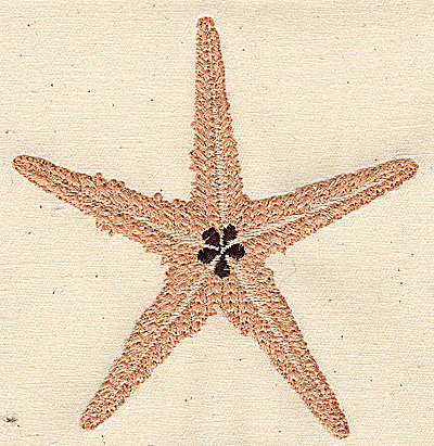 Embroidery Design: Starfish 4.09w X 4.28h