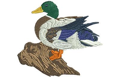 Embroidery Design: Mallard Green Head Med 3.53w X 3.14h
