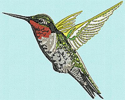 Embroidery Design: Realistic Hummingbird 4.56w X 3.75h