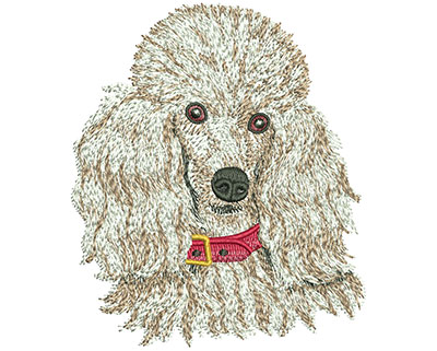 Embroidery Design: Toy Poodle Med 3.38w X 3.94h