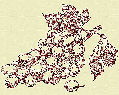 Embroidery Design: Winery grapes medium 6.13w X 8.06h
