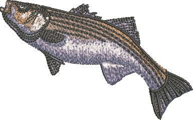 striped bass swim embroidery design