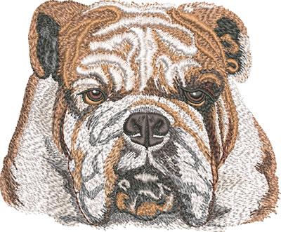 K-7632BulldogFaceFront_L