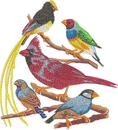 7691 Bird Group