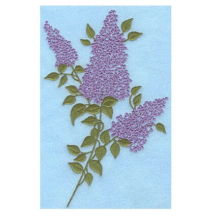 Lilac Blooms A