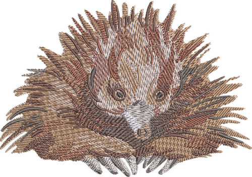 outback echidna sitting embroidery design