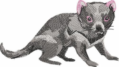 Outback Tasmanian devil