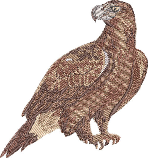 wedge-tailed eagle embroidery design