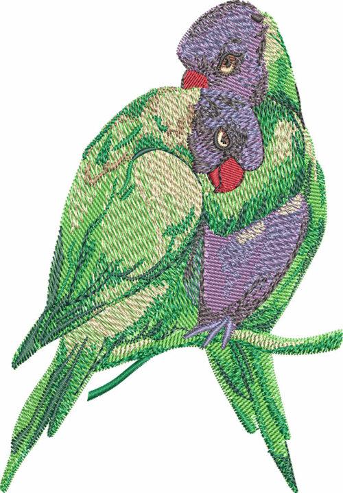 rainbow lorikeet embroidery design