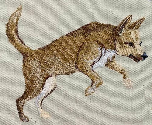 Outback Dingo