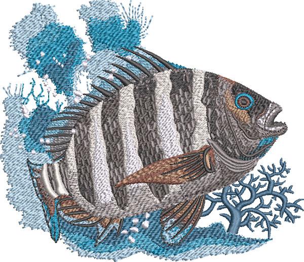 sheepshead fish embroidery design